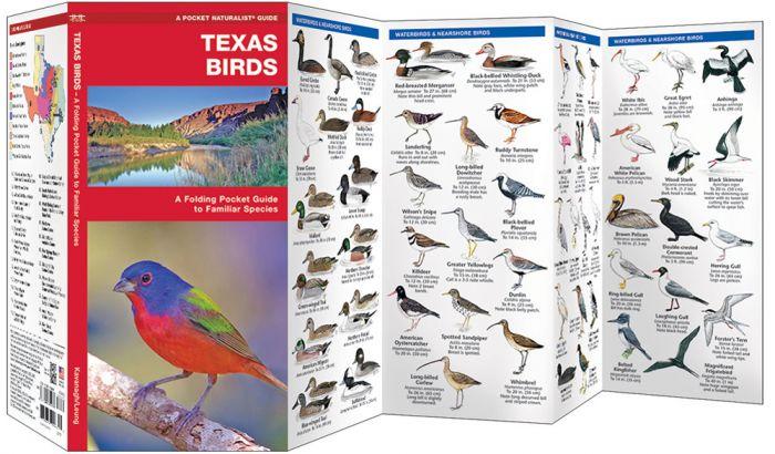 Texas Birds (Pocket Naturalist® Guide)