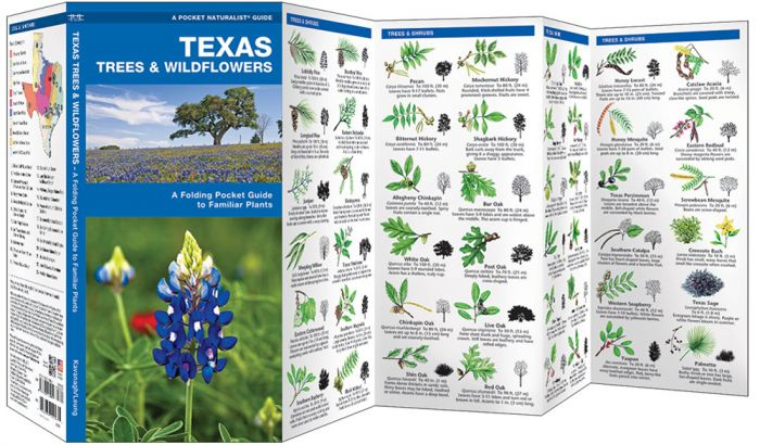 Texas Trees & Wildflowers (Pocket Naturalist® Guide).