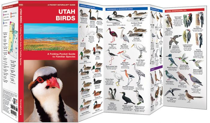 Utah Birds (Pocket Naturalist® Guide)