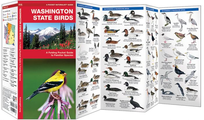 Washington State Birds (Pocket Naturalist® Guide)