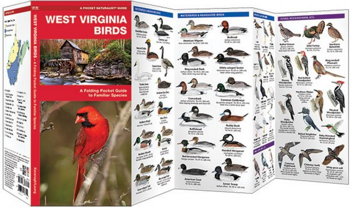West Virginia Birds (Pocket Naturalist® Guide)