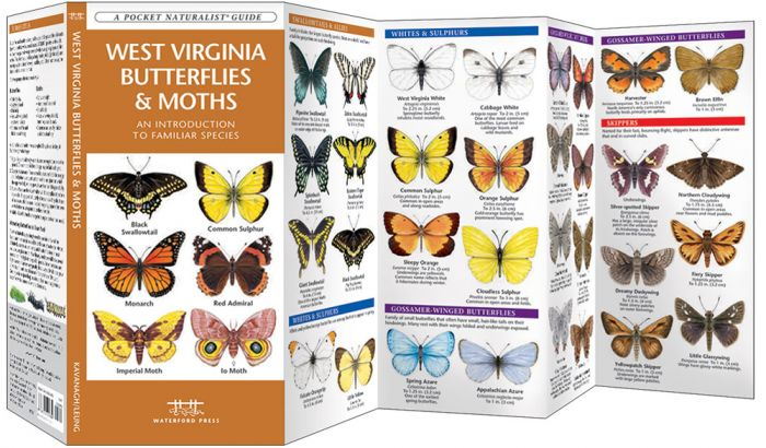 West Virginia Butterflies & Moths (Pocket Naturalist® Guide)