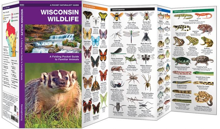 Wisconsin Wildlife (Pocket Naturalist® Guide)