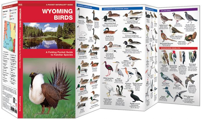 Wyoming Birds (Pocket Naturalist® Guide).