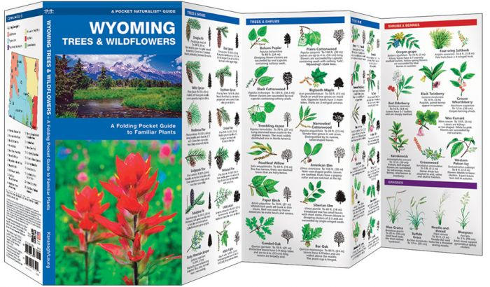 Wyoming Trees & Wildflowers (Pocket Naturalist® Guide)