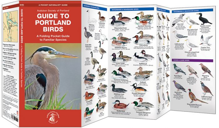 Guide To Portland Birds (Pocket Naturalist® Guide)