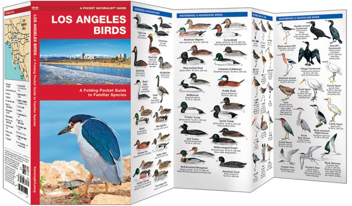 Los Angeles Birds (Pocket Naturalist® Guide)
