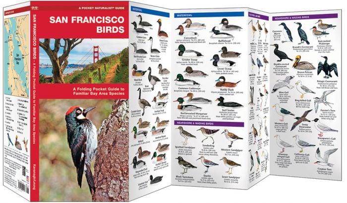 San Francisco Birds (Pocket Naturalist® Guide)
