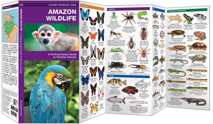 Amazon Wildlife
