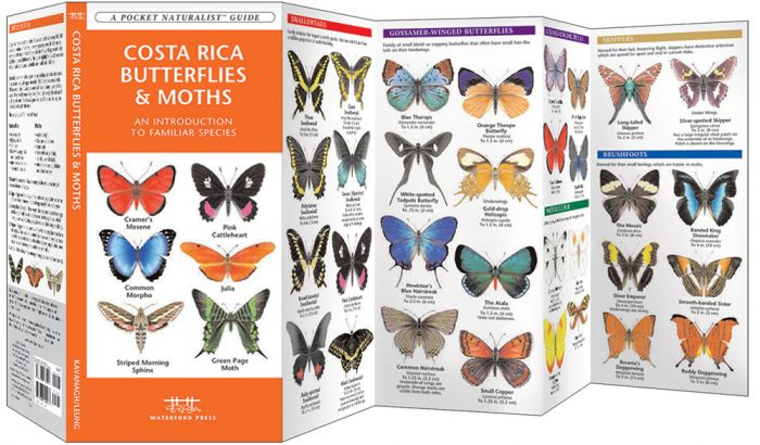 Costa Rica Butterflies & Moths (Pocket Naturalist® Guide).