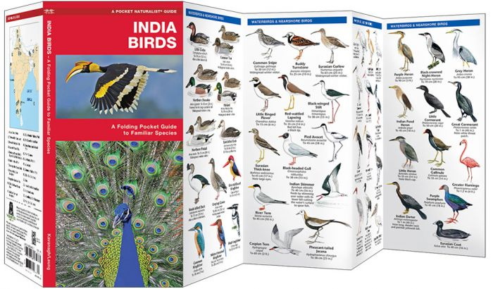 India Birds (Pocket Naturalist® Guide).