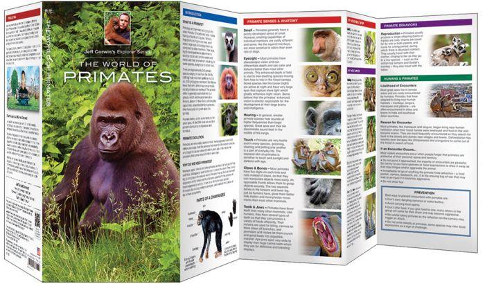 World Of Primates