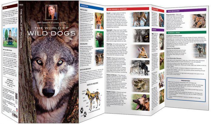World Of Wild Dogs