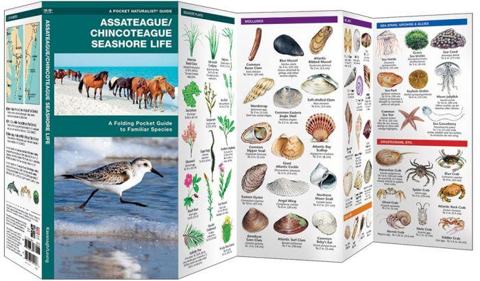 Assateague/Chincoteague Seashore Life (Pocket Naturalist® Guide).