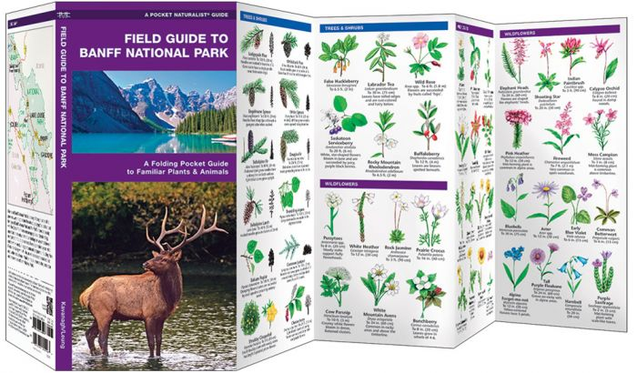 Field Guide To Banff National Park (Pocket Naturalist® Guide).