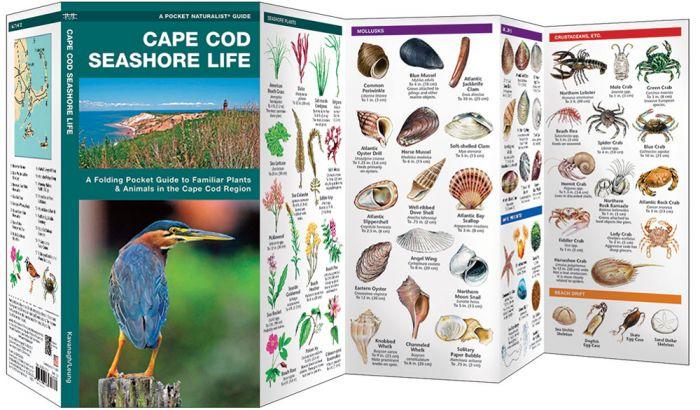 Cape Cod Seashore Life (Pocket Naturalist® Guide).