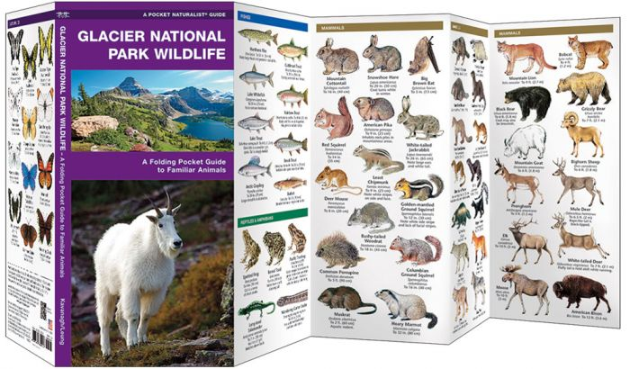 Glacier National Park Wildlife (Pocket Naturalist® Guide).