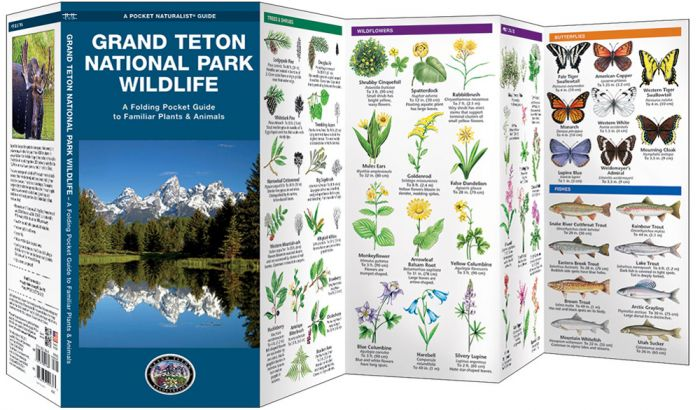 Grand Teton National Park Wildlife (Pocket Naturalist® Guide).