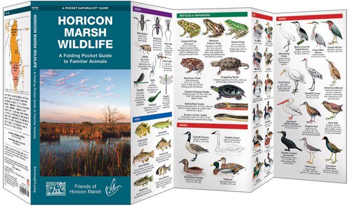 Horicon Marsh Wildlife (Pocket Naturalist® Guide).