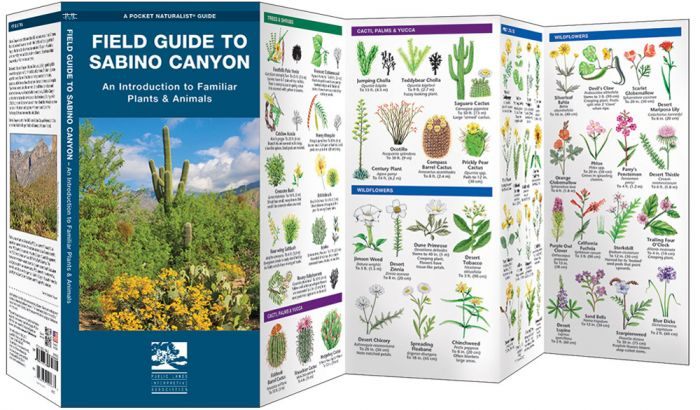 Field Guide To Sabino Canyon (Pocket Naturalist® Guide).