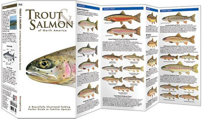 Trout & Salmon of North America (Pocket Fish Identification Guide®)
