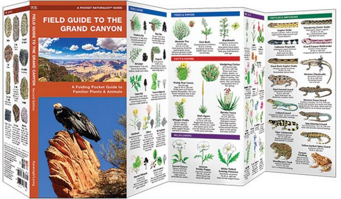 Field Guide to the Grand Canyon 2nd Edition (Pocket Naturalist® Guide)