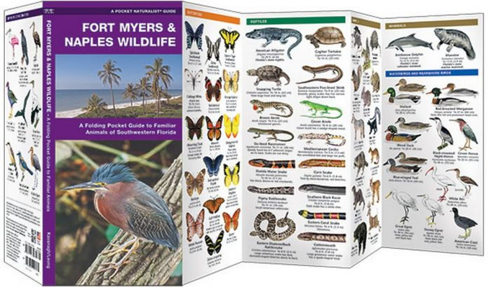 Fort Myers & Naples Wildlife (Pocket Naturalist® Guide)