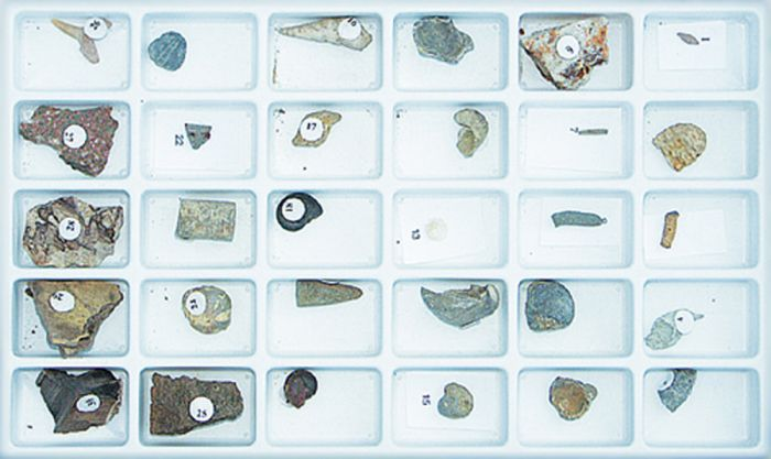 Advanced Fossil Collection