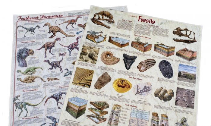 Feathered Dinosaurs & Fossils Laminated Poster Set (Discounted Set of 2 Posters)