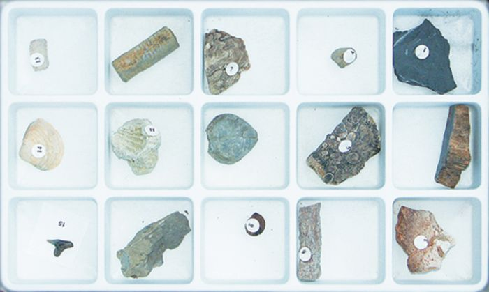 Methods Of Fossilization Collection