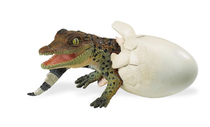 Crocodile (Hatching) Model