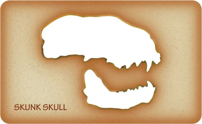Skunk Trace-A-Skull® Template
