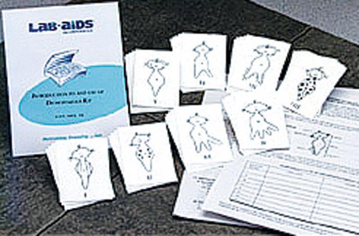 Introduction To Dichotomous Keys Kit