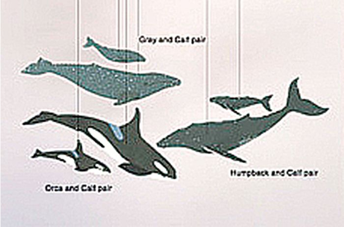Whales Mobile