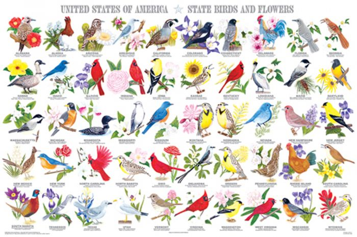 State Birds And Flowers Poster (Laminated)