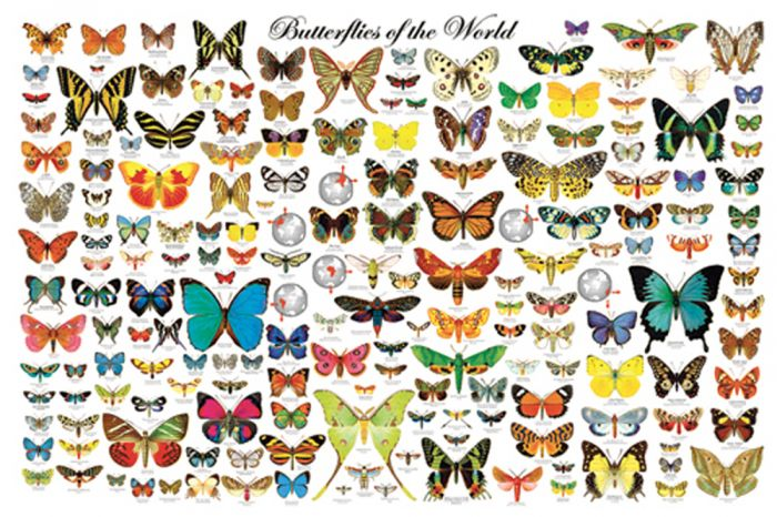 Butterflies Of The World Poster (Laminated)