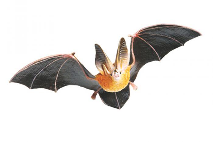 Bat (Townsend'S) Model