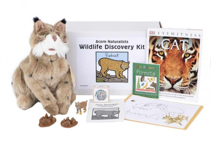 Wildlife Discovery® Kit: Bobcat