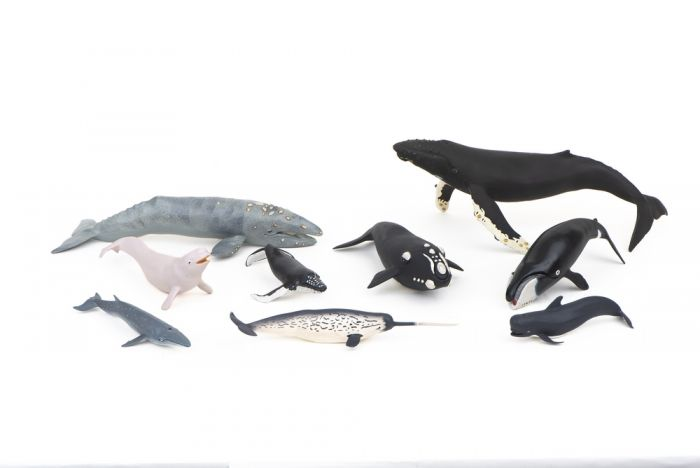 Whales Model Collection (Discounted Set of 9 Models)