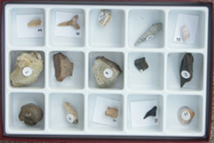 Fossils Over Time - Cenozoic Collection
