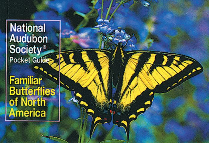 Butterflies (Audubon Society Pocket Guides)