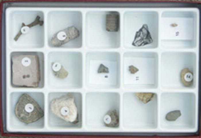 Fossils Over Time - Paleozoic Collection