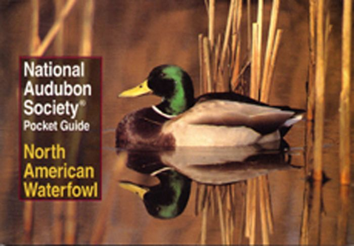 Waterfowl (Audubon Society Pocket Guides)