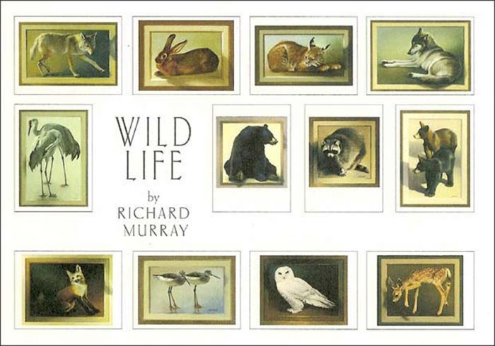 Wild Life (Boxed Notecards).