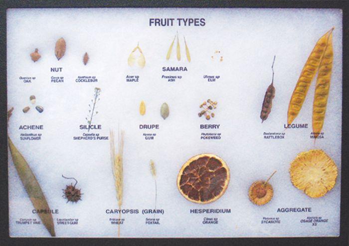 Fruit Types Display