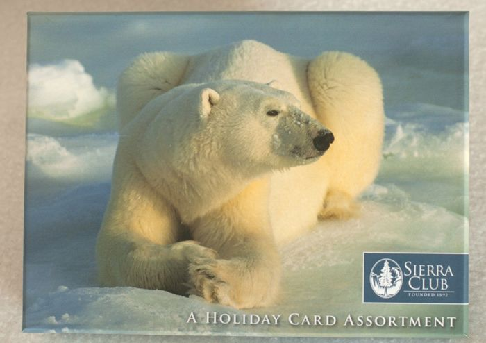 Polar Bears Holiday Boxed Notes