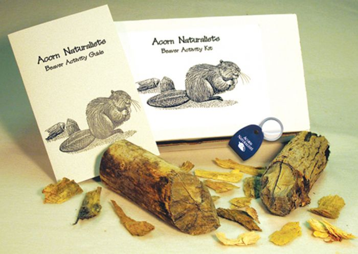 Beaver Clues (Animal Signatures® Kit)