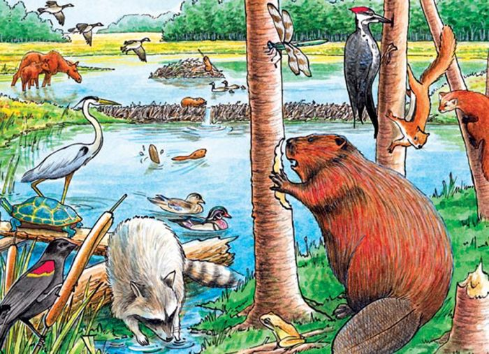 Beaver Pond (35 Piece Tray Puzzle)