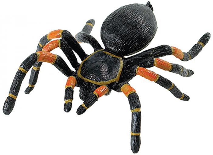 Tarantula (Orange-Kneed) Model