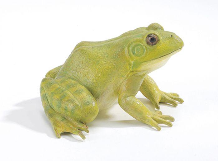 Bullfrog (American) Model